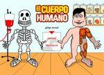 huesos_musculos.jpg